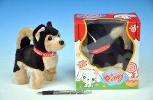 Pes Husky Puppy s obojkem plyšový chodící a ště...